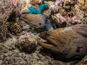 Scuba Travel, red SeaMoray's Red Sea Trip