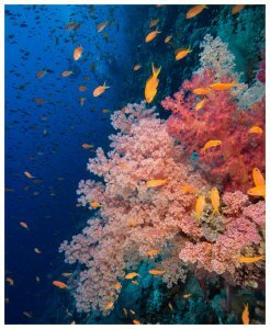 Scuba Travel, Red Sea, Hurricane,
