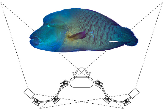 fishinfocus, Mario Vitalini, Napoleon Wrasse