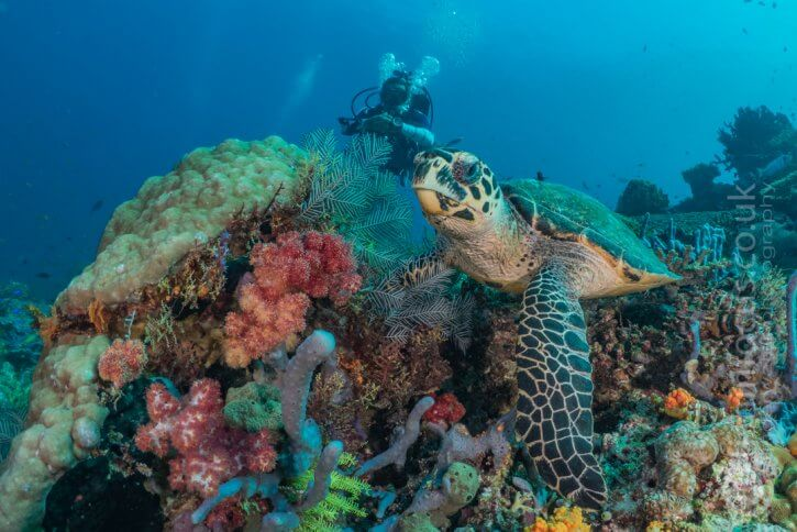 Scuba Travel, Turtles, Mario Vitalini, fishinfocus