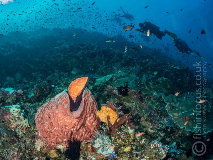 Komodo, Scuba Travel, Bato Balong