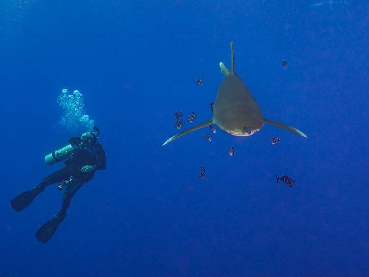 Scuba Travel, Egypt, Hurricane, Red Sea, oceanic whitetip
