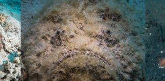 Scuba Travel, Stonefish