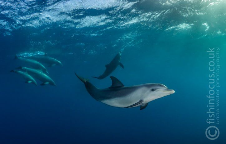Scuba Travel, Red Sea, Egypt, The Barge, dolphins