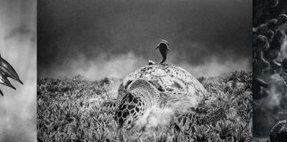 Scuba Travel, black and white, PhotoFINish