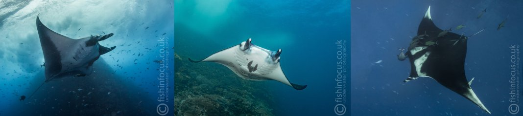 Scuba Travel, Manta, PhotoFINish