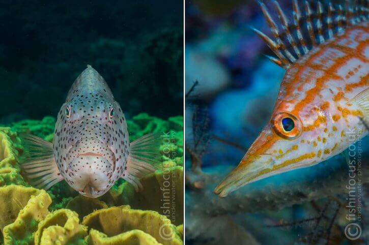 Scuba Travel, Winter Warmer, Red Sea, photo workshop, fishinfocus.co.uk