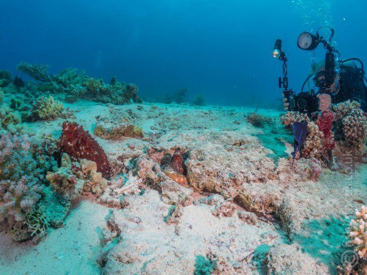 Scuba Travel, PhotoFINish, Red Sea