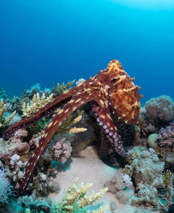 Scuba Travel, octopus, PhotoFINish
