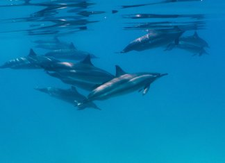 Scuba Travel, PhotoFINish, dolphin