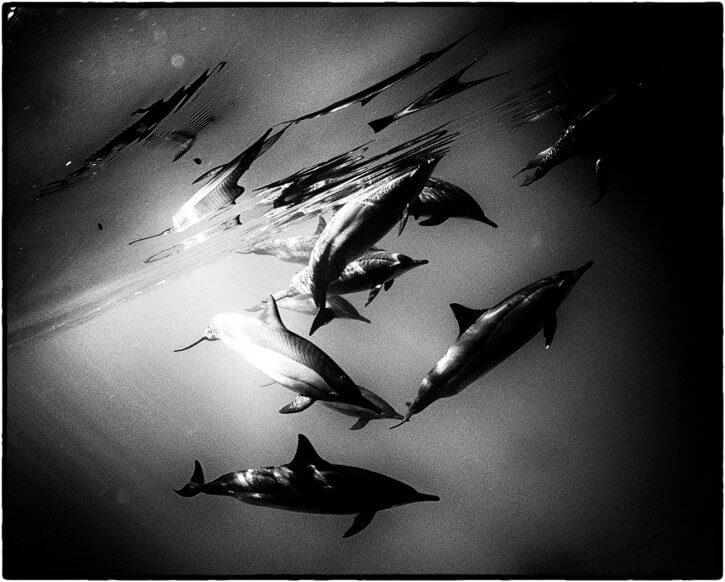 fishinfocus, Scuba Travel, underwater photography,