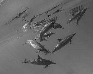 fishinfocus, Scuba Travel, underwater photography, Komodo Reef