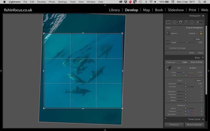 Scuba Travel, dolphins, PhotoFINish, editing