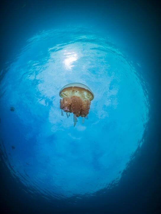 Scuba Travel, Snell's window, Jellyfish