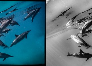 Scuba Travel, dolphins, PhotoFINish, editing