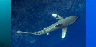 Scuba Travel, PhotoFinish, sharks