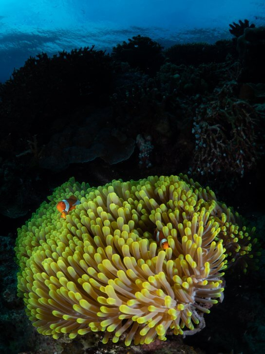 Scuba Travel, fishinfocus, inward lighting