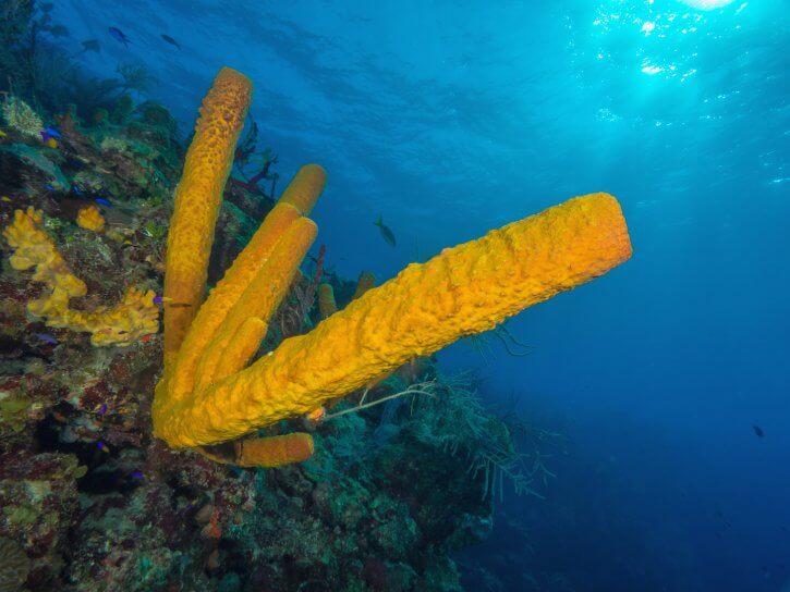 Scuba Travel, Belize, sponges