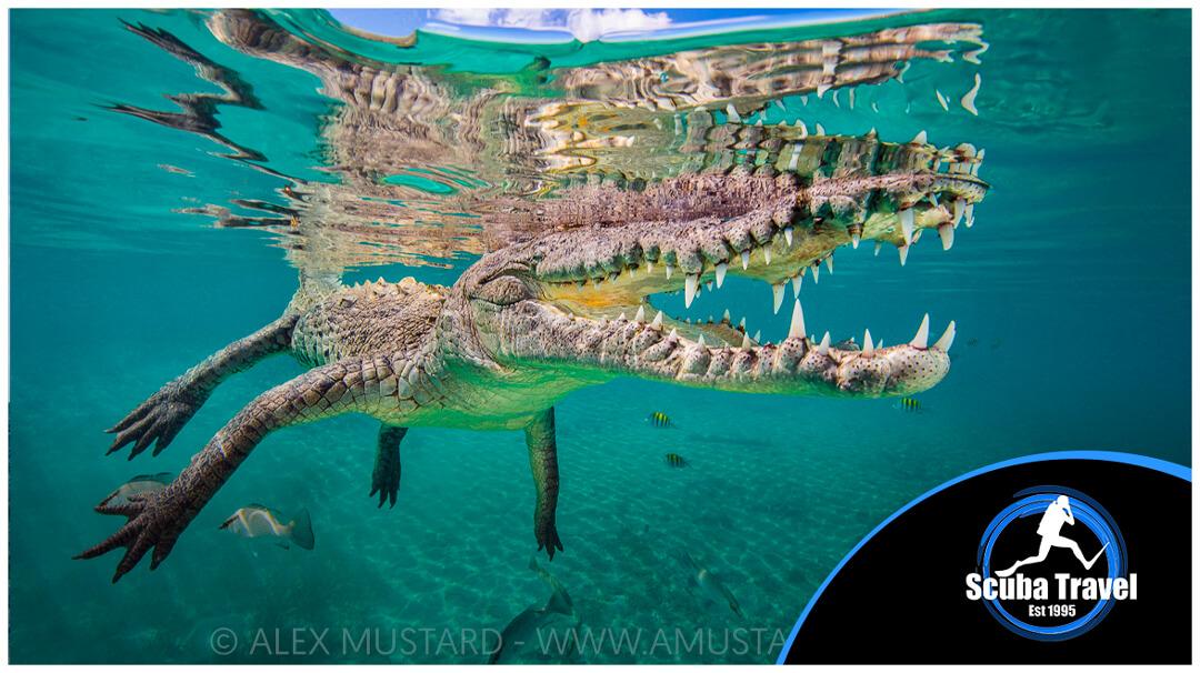 Scuba Travel, Alex Mustard, Jardines de la Reina, Caribbean