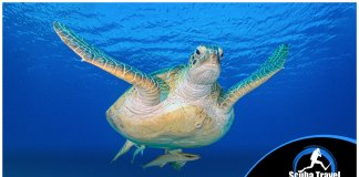 Scuba Travel, offers, diving holidays, turtle