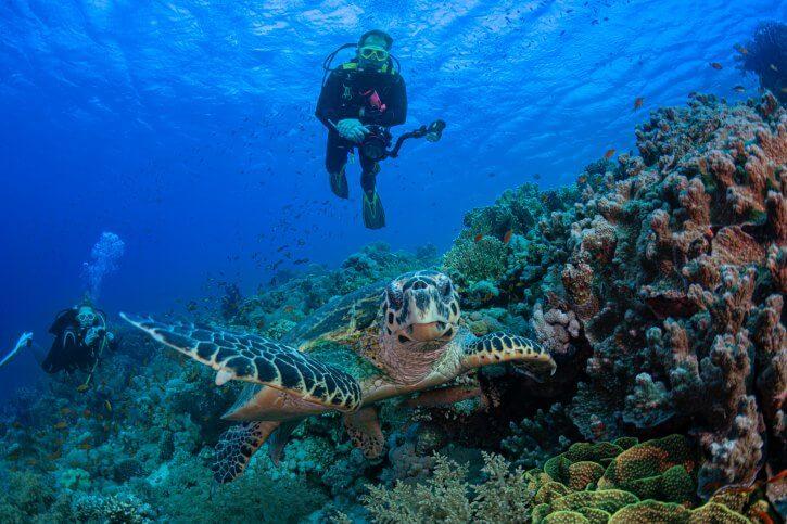 Scuba Travel, Red Sea, Tiran, Turtle