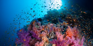 Scuba Travel, Red Sea, Shark and Yolanda, soft corals, Wrecks and Reefs