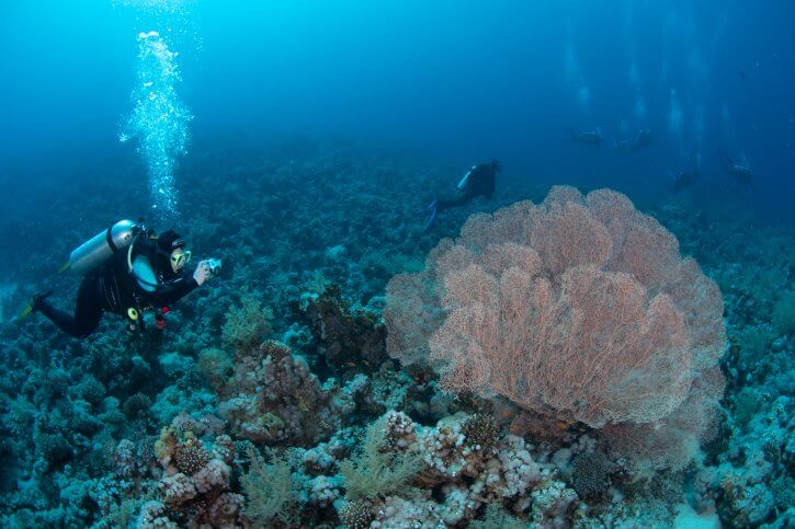 Scuba Travel, Red Sea, Tiran, Sea Fan