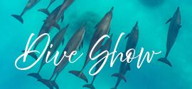 Dive show specials