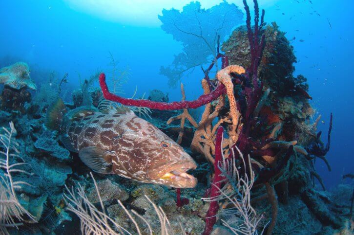 Scuba Travel, diving holidays, Caribbean,