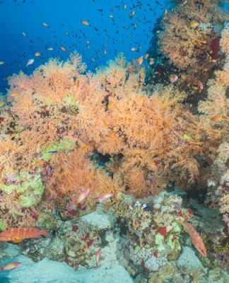 Scuba Travel, Diving holidays, Red Sea, Egypt, Tiran