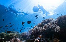 Freediving and Yoga - Manado