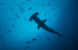 Deep South Southern Sharks