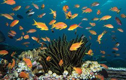 Seven Southern Atolls