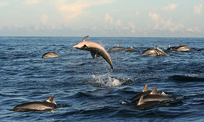 Whale & Dolphin Snorkelling