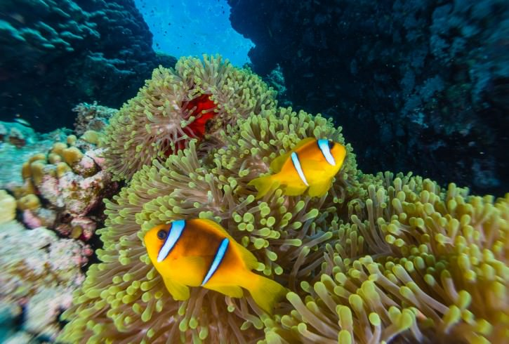 Close Focus Wide Angle Clownfish @ f16 FIXUWL28M67 Twin S&S YSD1 strobes.